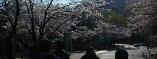 2014 꽃놀이